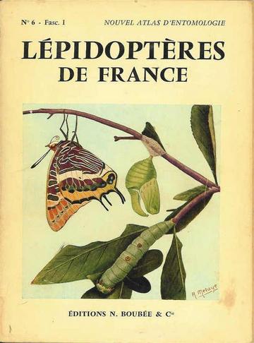Lépidoptères de France