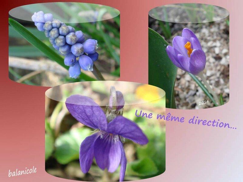 balanicole_2015_05_meme direction