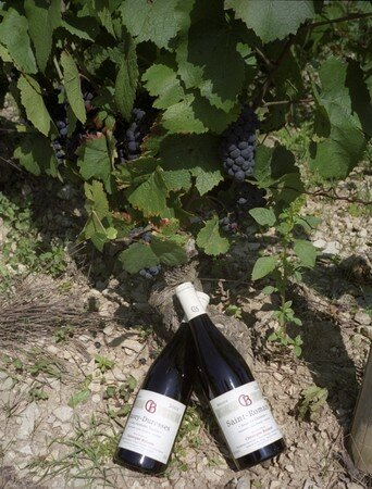Vin_Buisson_bouteille_pinot