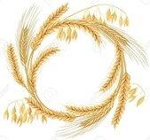 88771423-guirlande-en-épis-de-blé-d-orge-d-avoine-et-de-seigle-quatre-grains-de-céréales-avec-des-épis-et-un-es