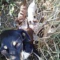 Petite chienne larguée avec ses chiots loin de tout