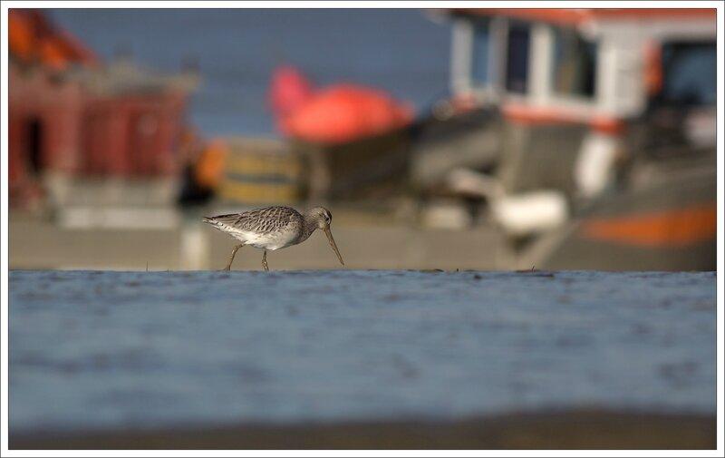 Aiguillon Pave barge bateau 071213 4