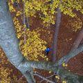 2009 10 31 Cyril en haut de l'arbre et Martin vu en bas