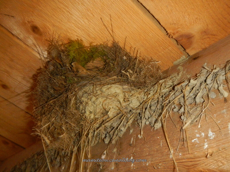 Sur une base de nid d'hirondelle