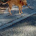 chien marina BT 2