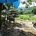 treck eleph P1190330