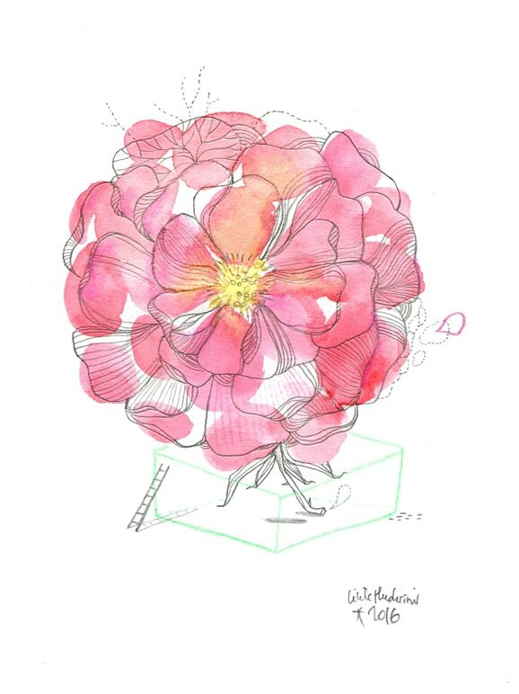 rosebd