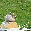 Deux pigeons s'aimaient d'amour tendre....