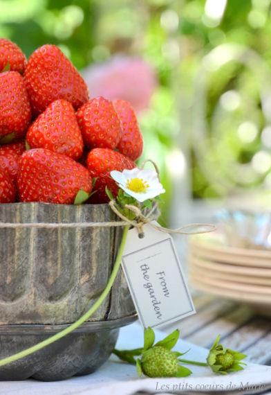 fraise__01