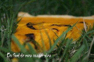 chanterelles_casseroles