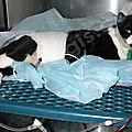 [grif' informe] le point sur les services vétérinaires en période de pandémie.