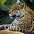 Bras de fer autour du petrole en amazonie ( equateur )