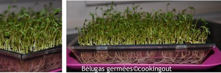 b_luga_germ_es