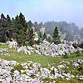 Le jardin de rocailles de Barlagne...