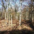 la forêt autour de l'étang