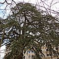 IMG_6784a