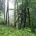 Forêt du Jura - Nans sous Sainte Anne 3