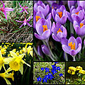 Plateau de retord au printemps. les narcisses des poètes.