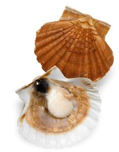 Coquille_St_jacques_09579