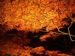 2006_11_24_Kyoto_Koyo__166__rs