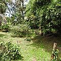 Végétation de Cacao 2018 08 19 -1