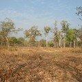 Forêt sèche clairsemée