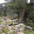 Ruines de Caseddu , massif de Cagna ...