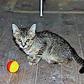 Maz parti à chats Chiens et Cie