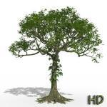 01 Ceiba pentandra kapok HD noe tropical 3d tree plant model factory icon