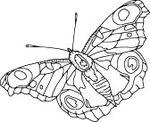 4921136-vecteur--papillon-contour-isole-sur-fond-blanc