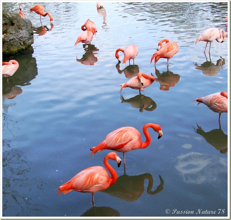 Les flamants roses (21)