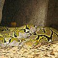 bz_30apr11_python