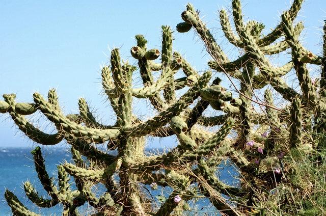 kaktu1
