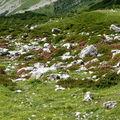 rhodos des Alpes