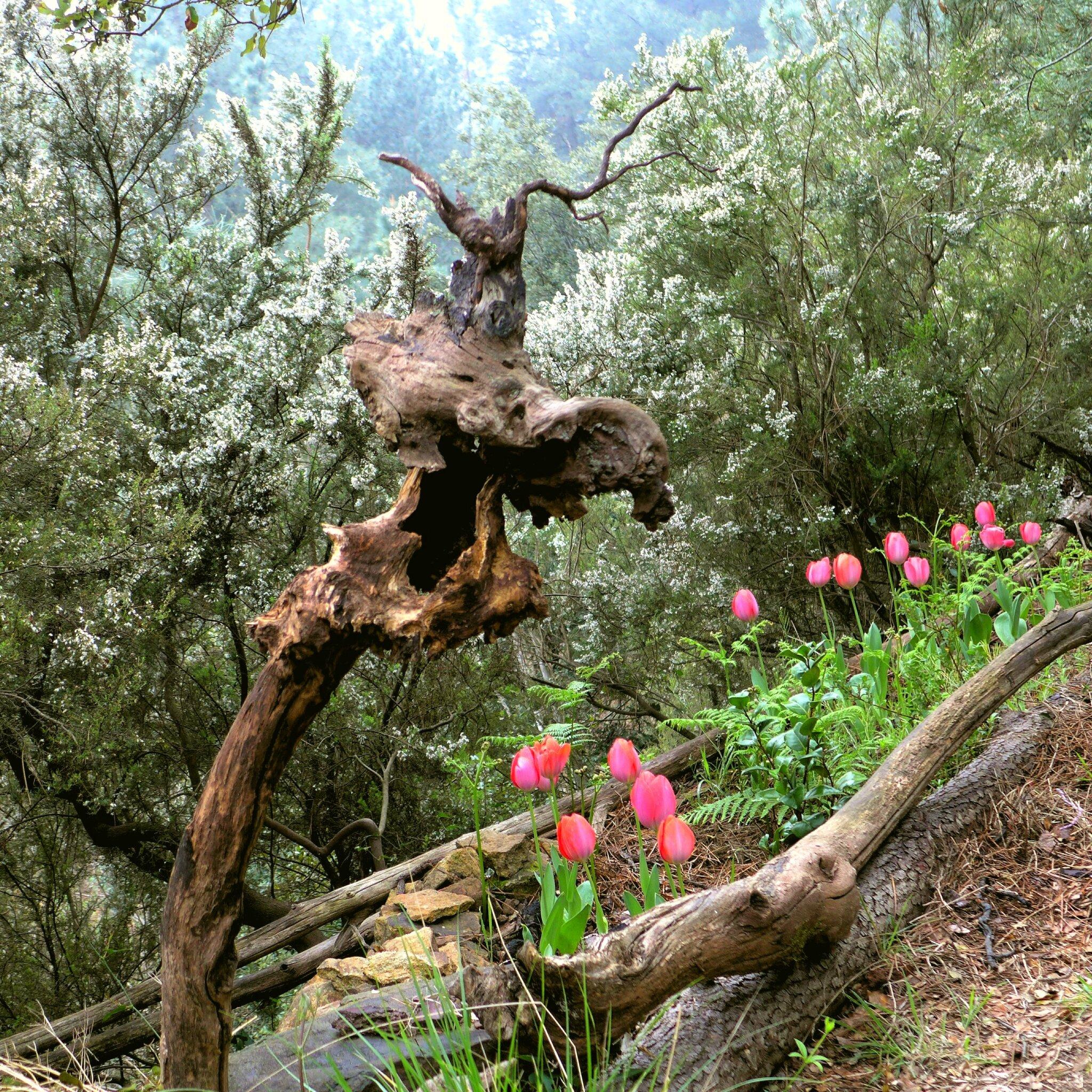 éclat de rire sur tulipes yurtao