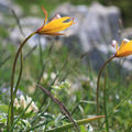 Fleurs sauvages : autres que orchidées