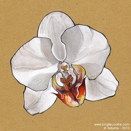 ORCHIDEE_GROS_PLAN_OK