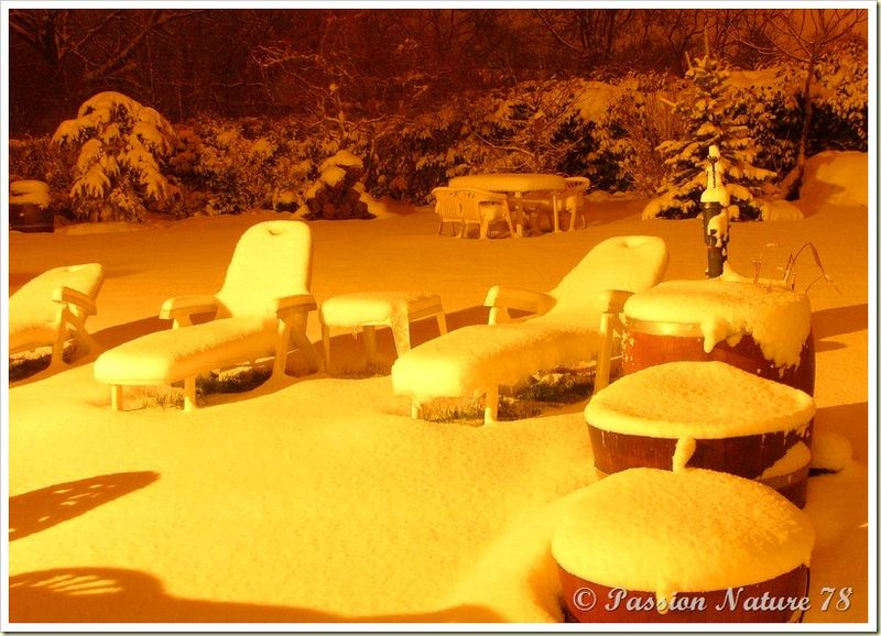 Notre jardin en hiver (6)