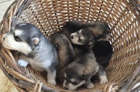 puppies_20191117_a