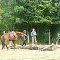 Jeux équestres manchots - parcours de pleine nature après-midi (135)