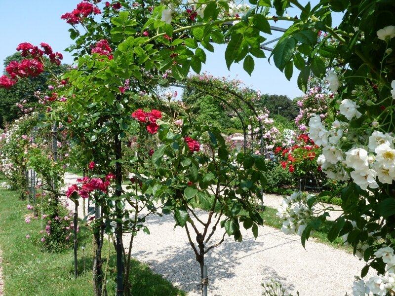 Roseraie Haÿ- les- Roses (56)