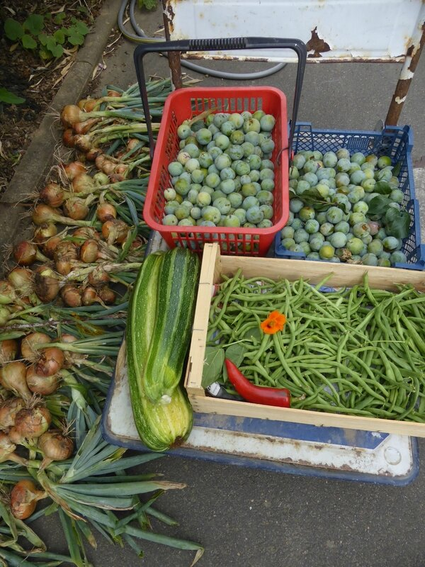 29-prunes, courgettes, haricots