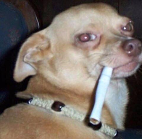 Dog cigaret