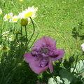 Au jardin à midi