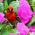 Les oiseaux de l'île de La Réunion
