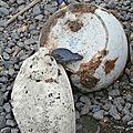 Maison Denis - 2014-07-21 - P7216367