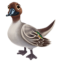 icon_duck_adult_northernpintail_b_128-443c9f87b1f6b40c1e2767