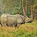 Inde : les rhinocéros à l'étroit au bengale-occidental
