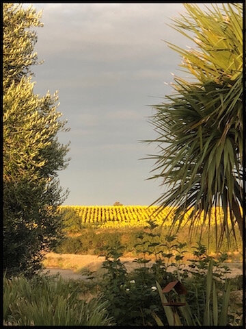 champ de tournesols vendee
