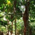 Im Jungle..